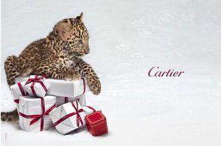 Cartier-snow-panther